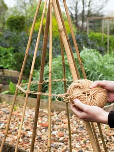 Build Support for Beans |Support is vital for these climbing plants. Build a wigwam from eight canes, ideally at least 7 ft (2.2 m) long, pushed firmly into the soil about 12 in (30 cm) apart, in a circle. Tie the canes securely at the top and again halfway down.