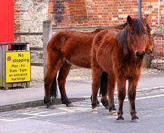 New Forest ponies on Beaulieu High Street, New Forest Cycle Ride, New Forest, Creature Feature, Hampshire, Ponies, Equestrian, National Parks, Wildlife, Creatures
