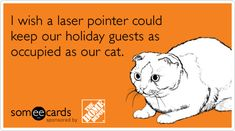 I wish a laser pointer could keep our holiday guests as occupied as our cat.