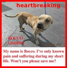Need Medical PLEDGES!!! ADOPT!! Urgent Dogs of Miami ROCCO (A1669505) I am a male tan Pit Bull Terrier mix. The shelter staff think I am about 5 years old and I weigh 44 pounds. I was found as a stray and I may be available for adoption on 01/06/2015. https://www.facebook.com/urgentdogsofmiami/photos/pb.191859757515102.-2207520000.1419980394./899255106775560/?type=3&theater