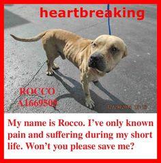 Por favor! Ayuden y adopten! Es maravillo el amor que brindan. Gracias..