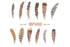 Collection of watercolor turkey feathers. * Vector EPS10 - For Turnkey Hunting season next year?