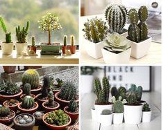 Como cuidar de cactos Plantar, Cactus Plants, Sweet Home, Garden, Blog, Garden Sink, Low Light Plants, Growing Plants, Garten