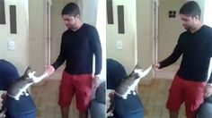 Watch the amazing moment a man strolls over to a very cool cat who proceeds to high five AND fist bump him.