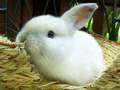 My bunny by Amy Smith, via 500px follow the white rabbit