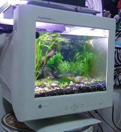 Creative reuse: old monitor aquarium Vaporwave, Arte Dope, Instalation Art, Old Computers, Deco Design, Aesthetic Pictures, Artsy, Cool Stuff, Photography