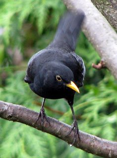 My favourite bird will be in my garden. Lovely, sweet and so friendly. A joy to look at and listen to.