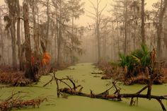 Amazing pea soup colored swamp.