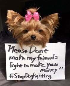 Lil yorkie Coby has a message for ALL of us! Stop dog fighting Ban do fighting in ALL states! Would you please help her????