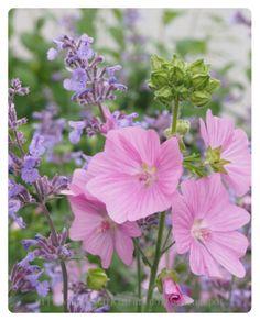 Myskimalva Cottage Garden Plan, Home And Garden, Landscaping Software, Different Plants, Fashion Room, Garden Planning, Pastel Colors, Perennials, Outdoor Gardens