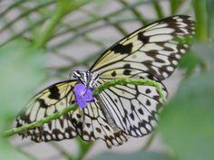 Butterflies Butterfly Schmetterling Schmetterlingshaus Maximilian Park Hamm