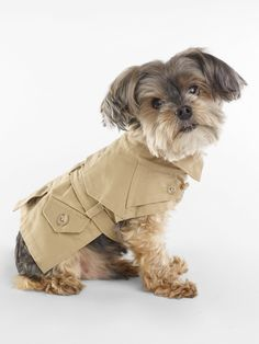 The Terrier and Lobster: Desired: Ralph Lauren Dog Trench Coat Schnauzer, Ralph Lauren, Dog Coats And Sweaters, Dog Boarding Near Me, Pet Style, Designer Handbags On Sale, Dog Clothes Patterns, Aggressive Dog, Pet Home