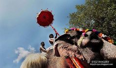 Kerala, Discovery, Journey, India, Culture, Facebook, Photography, Goa India, Photograph