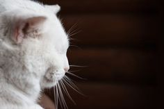 Sensory Organs – Whiskers Not Just Cute But Important