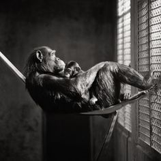 captivity in expressive black and white photography