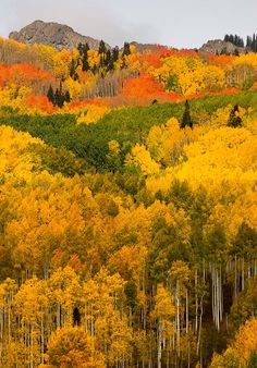 Places to visit in Colorado this fall. Explore this beautiful state! Visit Colorado, Aspen Colorado, Colorado Hiking, Colorado Mountains, Colorado Springs, Autumn Scenery, All Nature, Fall Pictures, Belleza Natural