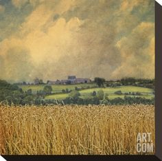 Picardy Wheat Stretched Canvas Print