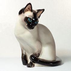 Senshall Siamese cat