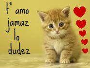 gatito con mensaje de te amo demasiado solo  ati
