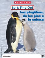 January 2011: Penguins | Let's Find Out Spanish | Scholastic.com