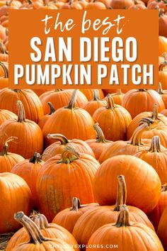 Find out all about the best pumpkin patch in San Diego California in this complete guide to Bates Nut Farm San Diego. This is the perfect way to enjoy fall in San Diego and one of the best things to do in San Diego in fall. Enjoy the fall activities and fall photography spots at one of the best San Diego pumpkin patches. | bates nut farm photography | bates nut farm pumpkin patches | san diego pumpkin patch | pumpkin patches in san diego Farm Photography, Autumn Photography, Pumpkin Patch San Diego, Best Pumpkin Patches, Autumn Activities, San Diego Travel, The Good Place, California Travel, Weekend Getaways