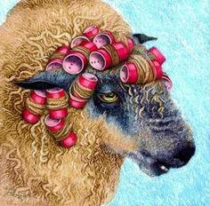 sheep in curlers