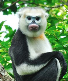 8 Weirdest Animals Live on Earth ! Ugly Animals, Rare Animals, Cute Baby Animals, Primates, Mammals, Beautiful Creatures, Animals Beautiful, Especie Animal, Majestic Animals