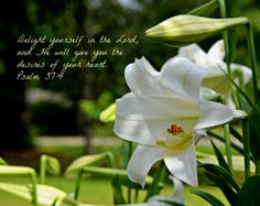 Delight yourself in the Lord-- Easter lilies