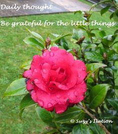 #ultrablog Living in #Gratitude in honour of World Gratitude Day http://suzysomedaysomewhere.blogspot.co.nz/2014/09/living-in-gratitude.html