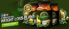 One case of an all-natural appetite suppressant is an infusion of hydroxycitric acid (HCA) from the Asian fruit garcinia cambogia. Know more on http://www.dr-omar.com/