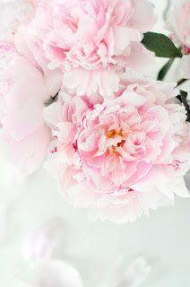 Angels & Roses -