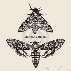 Vector hand drawn Deaths head hawk moths illustration.
