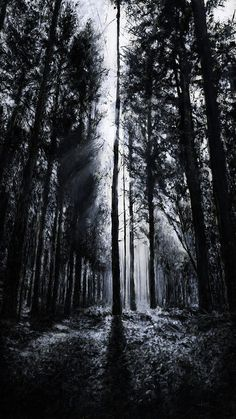 In The Woods 5 Print by Christian Klute. All prints are professionally printed, packaged, and shipped within 3 - 4 business days. Choose from multiple sizes and hundreds of frame and mat options. #woods #forest #trees #black #dark #light #sunset #magic #black and white #monochrome #light #white #silhouettes