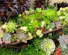 Impressive Succulent Landscaping and Containers by Laura Eubanks