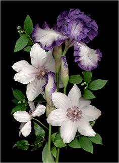 Purple Flowers. botanical scanner photography - Scanner Photography By Ellen Hoverkamp