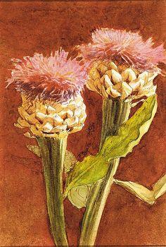 """Thistle"": John Singer Sargent (American, Florence 1856–1925 London)."
