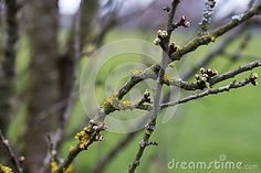 The different colours of spring with lichen growing on the trees