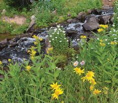 Black Mountain Creek Trail in the Flat Tops Wilderness Area near Steamboat Springs.