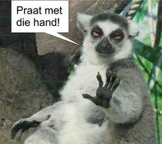 Praat met die hand