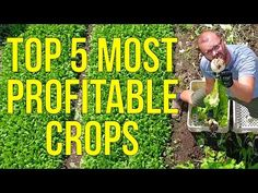 (45) The 5 Most Profitable Crops I've Ever Grown - YouTube