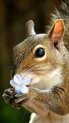 People Are Posting Photos Of Working Cats - Monday, October 14 Cute Creatures, Beautiful Creatures, Animals Beautiful, Animals Of The World, Animals And Pets, Baby Animals, Garden Animals, Animal Magic, Mundo Animal