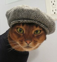 Newsboy Cap for CAT in black/grey herringbone by CatAtelier.  I wish one of my cats would allow me to put a hat on them.