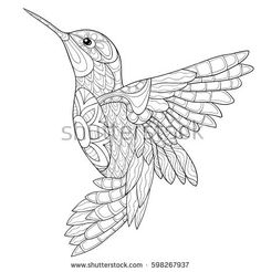 Adult coloring book humming-bird,zen art style vector illustration.