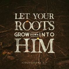 Let your roots grow down into him, and let your lives be built on him. —Colossians 2:7