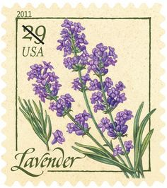 USA stamp from 2011 Herbs Series - Lavender 29 Cents all 5 stamps from this series are attached to the back of a Magic Kingdom postcard Decoupage, Lavender Cottage, Lavender Fields, Lavender Flowers, Lavender Stamp, Lavander, Wedding Envelopes, Flower Stamp, Vintage Stamps