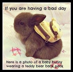 bad day humor - Bing Images