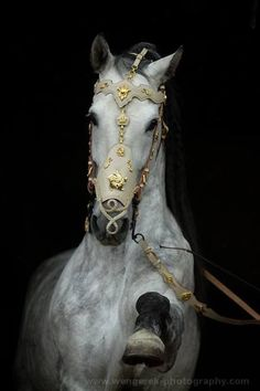 Karolina Wengerek EQUINE PHOTOGRAPHY Get me that bridle immediately, if I was a queen that is what I would demand of, a dapple gray thoroughbred horse and this bridle.