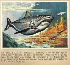 Album Historia Natural 1968  368 Pez Piloto