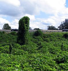 Rule #1:  Never stand still more than 15 minutes in kudzu!  Photo by Mark Jenkins // Glazed Paradise