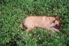 Dormindo na grama! <3
